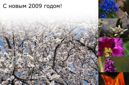 nowim_godom_450